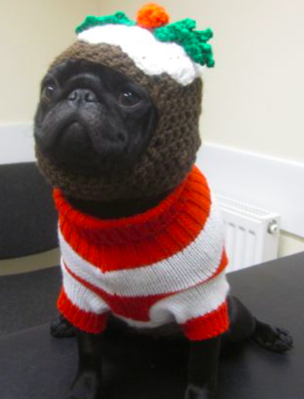 Christmas Pet Costumes.We D Love To See Your Pets Christmas Costumes 387 Vets